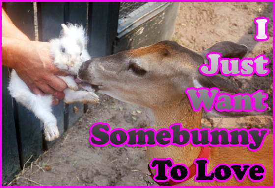 deer-kisses-somebunny-love
