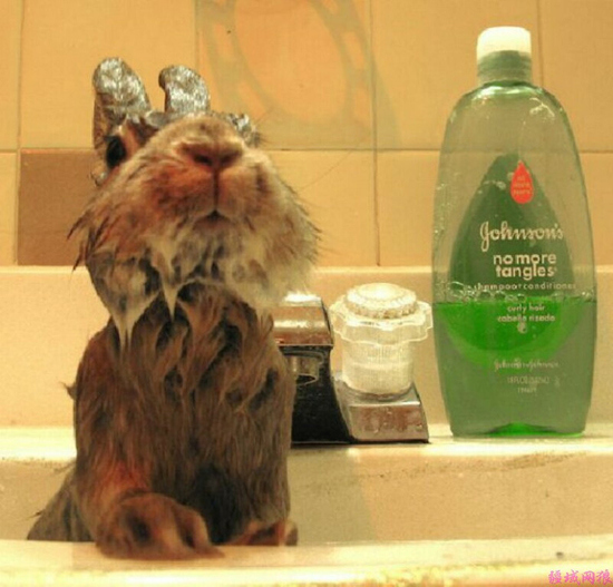 Lather, rinse, repeat to prevent bad hare days