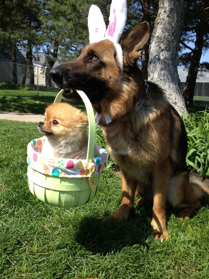 I wish the Easter dog brought me a Pomeranian for Easter...