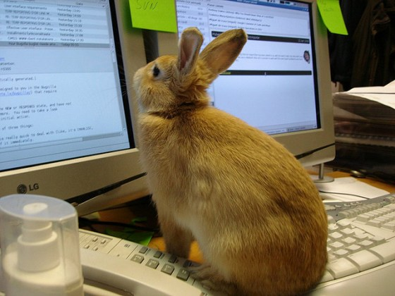 Figaro the rabbit keeps an eye on his inbox