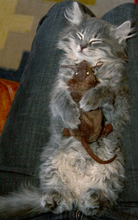 Tom & Jerry put aside their differences