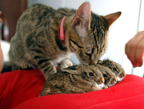 Cats That Hop Like Rabbits Gif