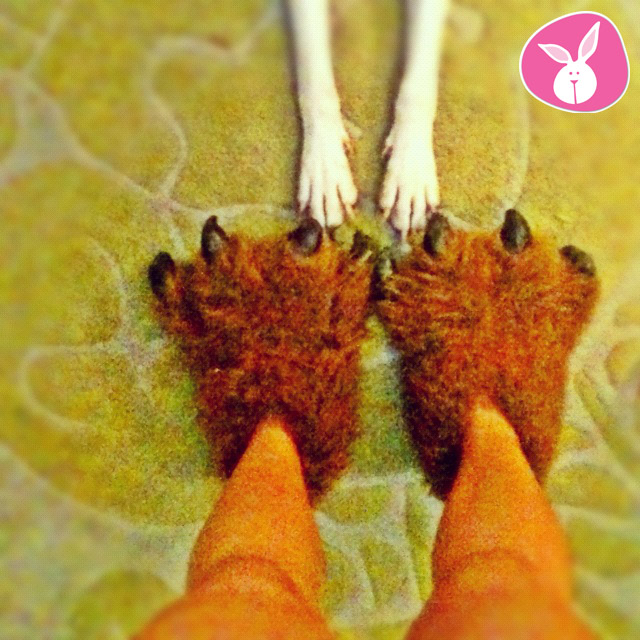 man in grizzly bear slippers with dog paws
