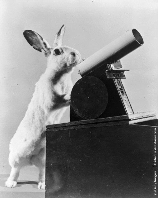 Rabbit looking through telescope