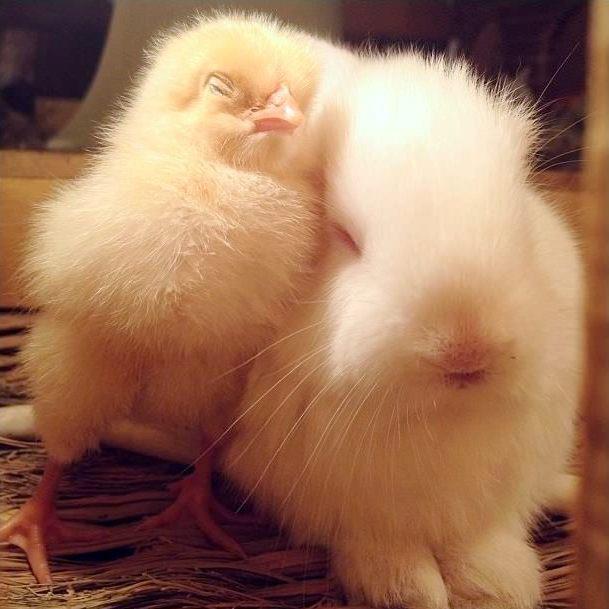 fuzzy-bunny-fuzzy-chick