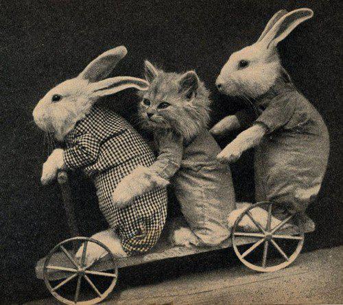 cat-bunny-bike.jpg