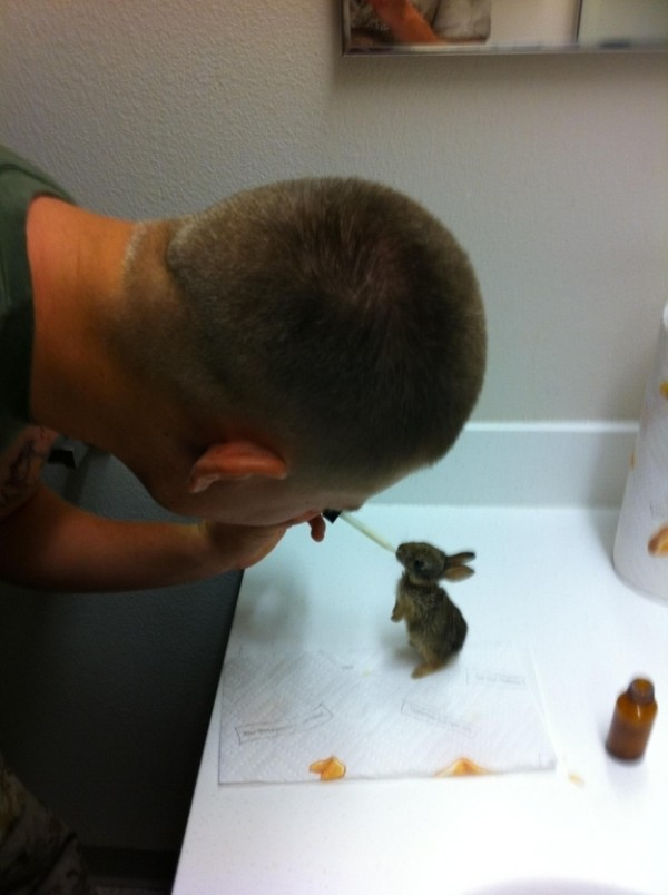baby-bunny-rescued-1