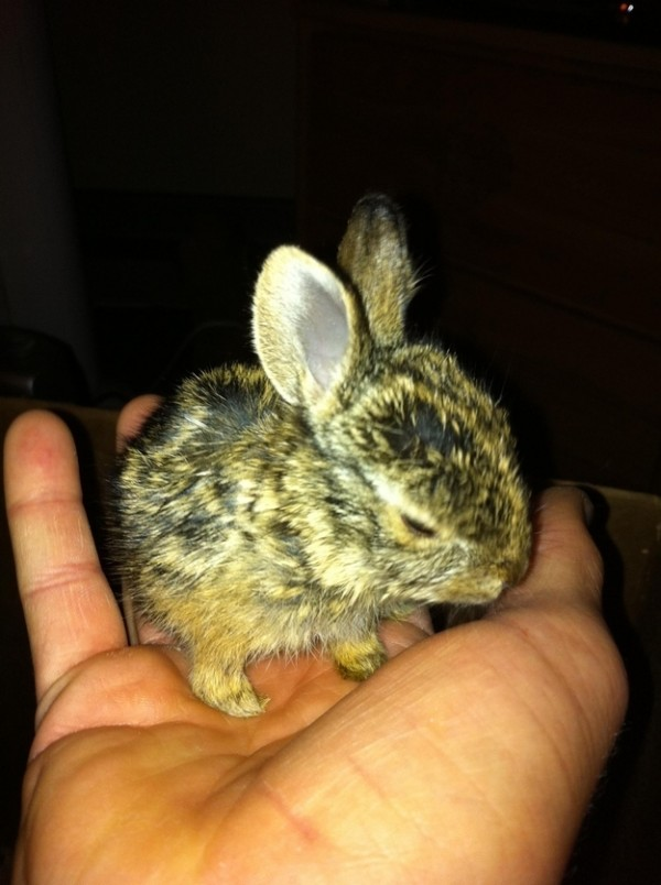 baby-bunny-rescued-2