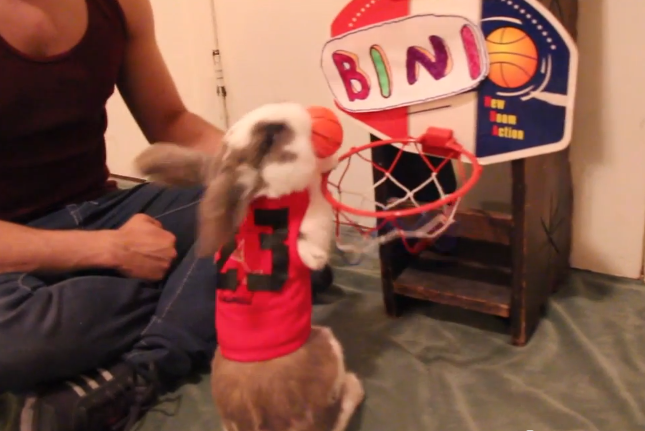 Watch Here S Video Of A Bunny Dunking A Basketball No