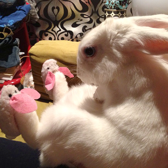 bunny-wearing-bunny-slippers