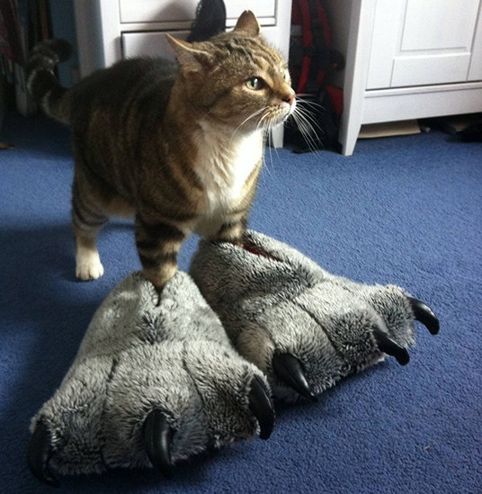 Cat Monster Slippers