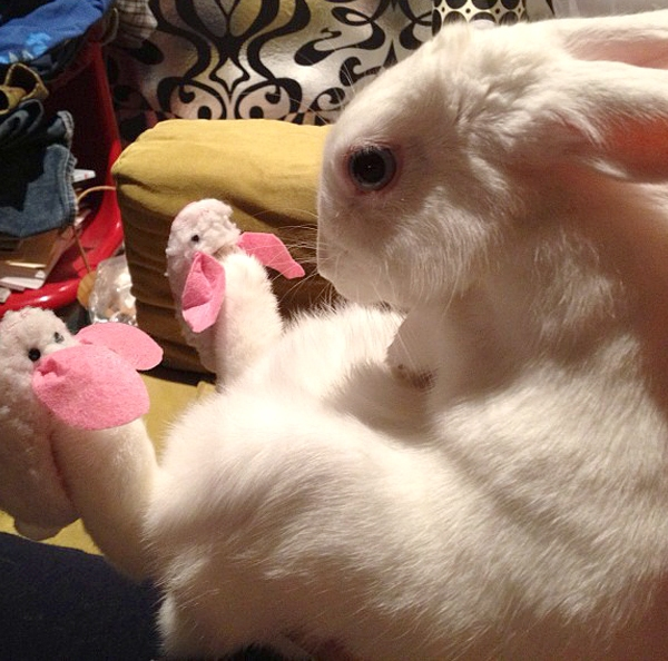 Rabbit Wearing Bunny Slippers