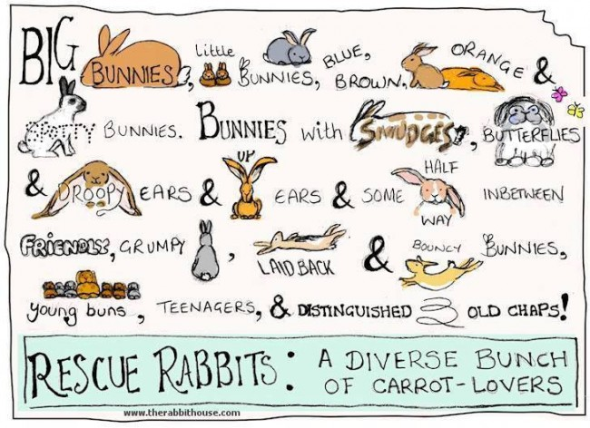 rescue-rabbits-rabbit-house-com