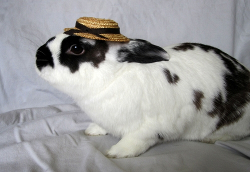 Bunnies Wearing Hats