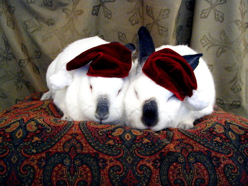 Bunnies With Hats