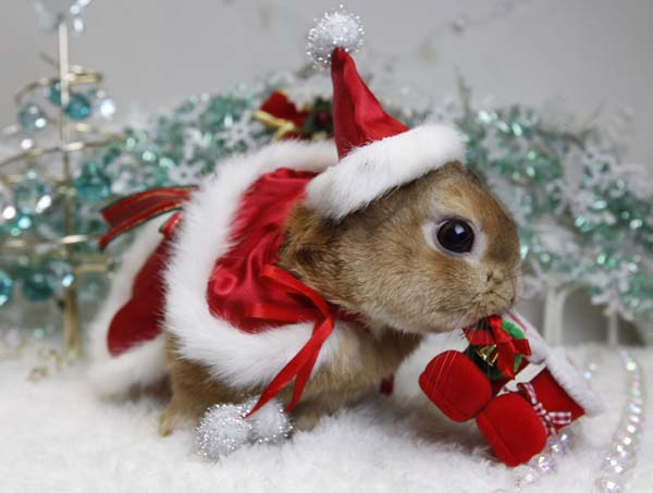 Bunny Christmas Hat