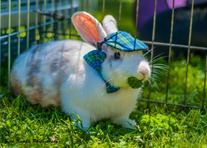 Bunny English Hat