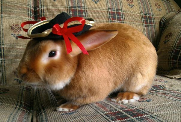 Bunny Mexican Hat
