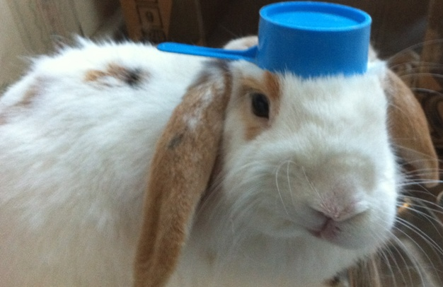 Bunny Pot Hat