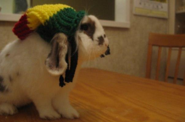 Bunny Rasta Hat
