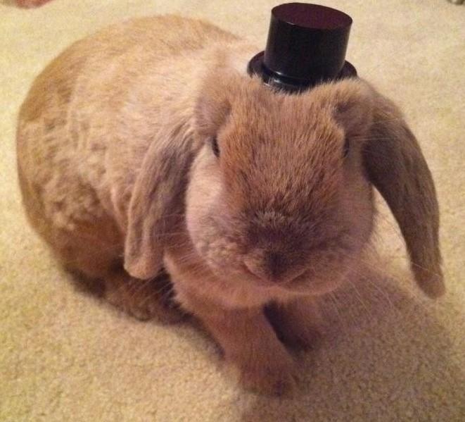 Bunny Sir Hat