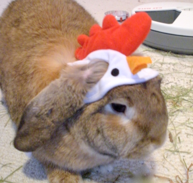 Bunny Wearing Hat