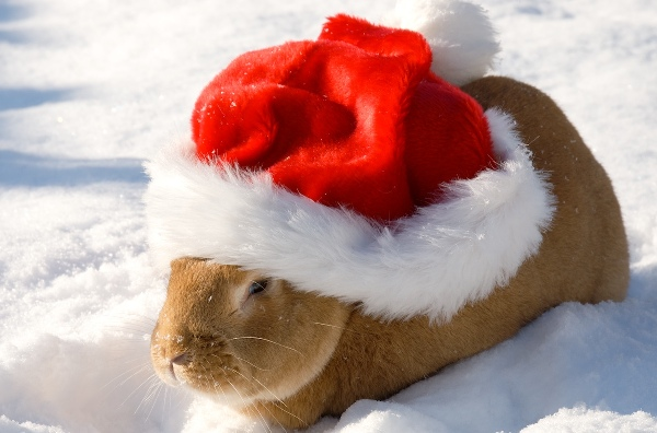 Christmas Bunny Hat