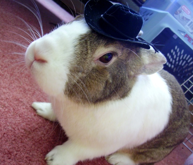 Rabbit Cowboy Hat