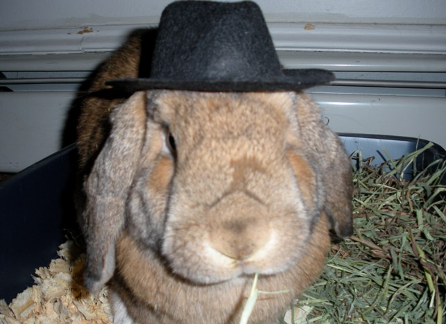 Rabbit Hat