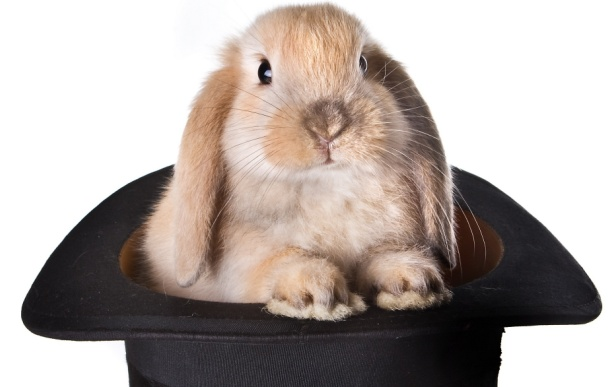 Rabbit Inside Hat