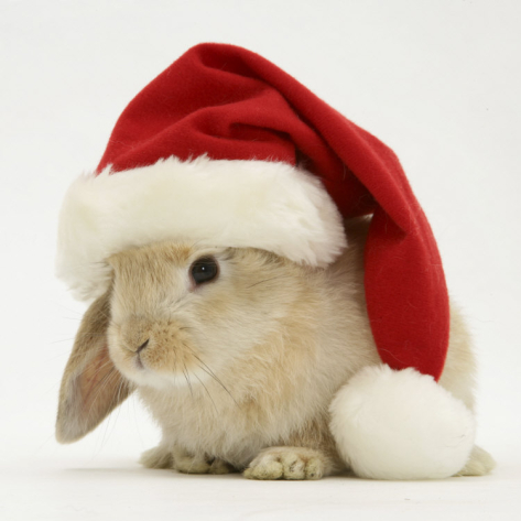 Rabbit With Hat
