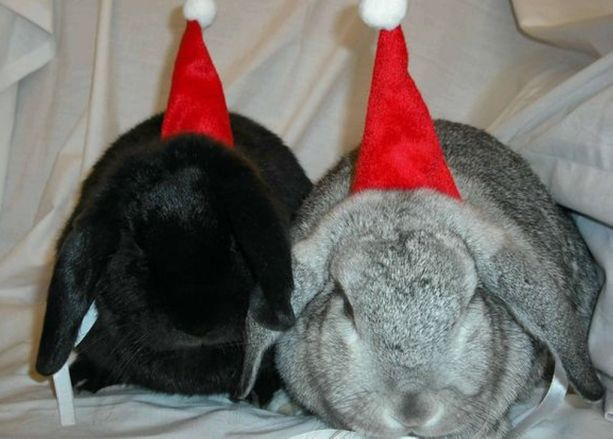 Rabbits Christmas Hats