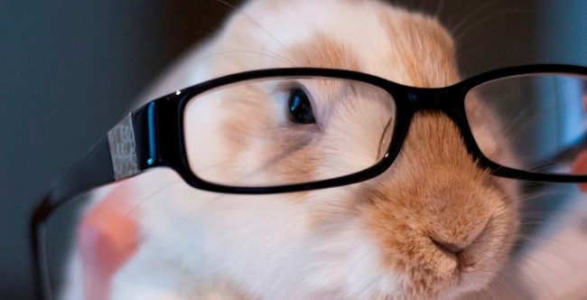 Bunny Glasses Gallery