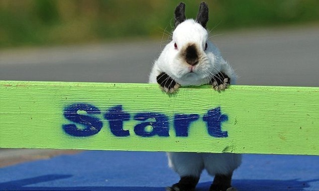 Bunny Jump Competition