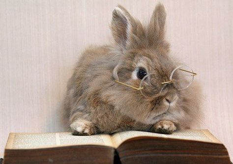 Cuteness Overload Bunnies With Glasses Gallery 10 Photos
