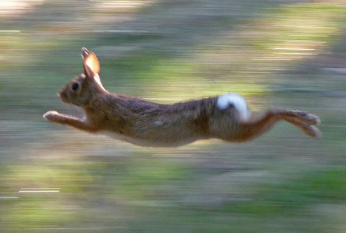 Fast Rabbit Run