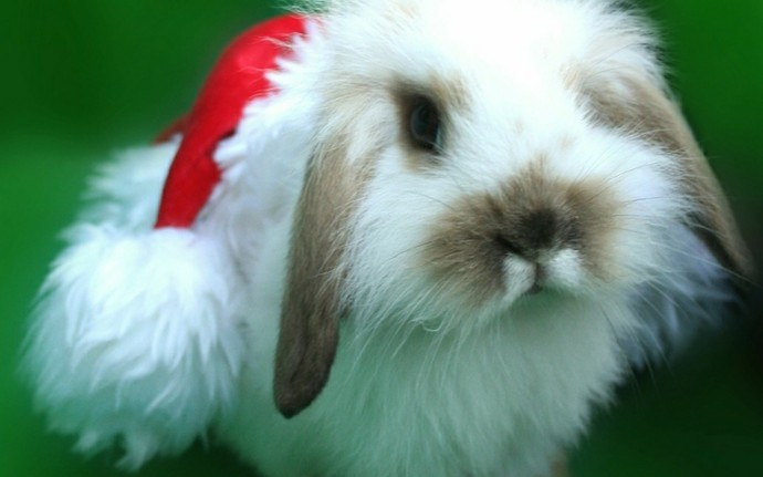 Christmas Bunny Rabbit