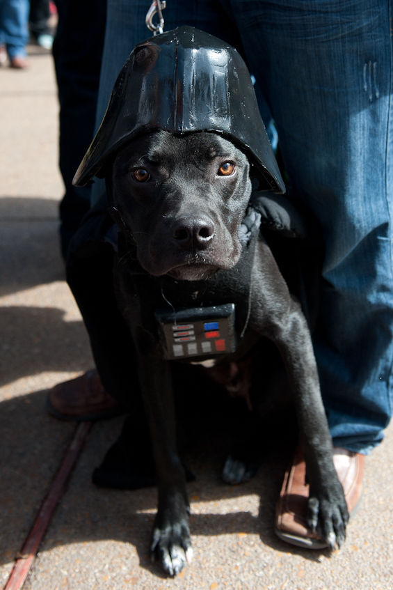 dog dressed as darth vader