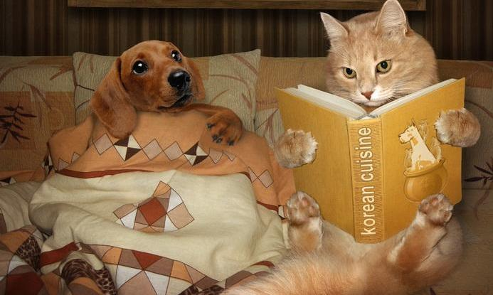 Funny Dog Cat Book