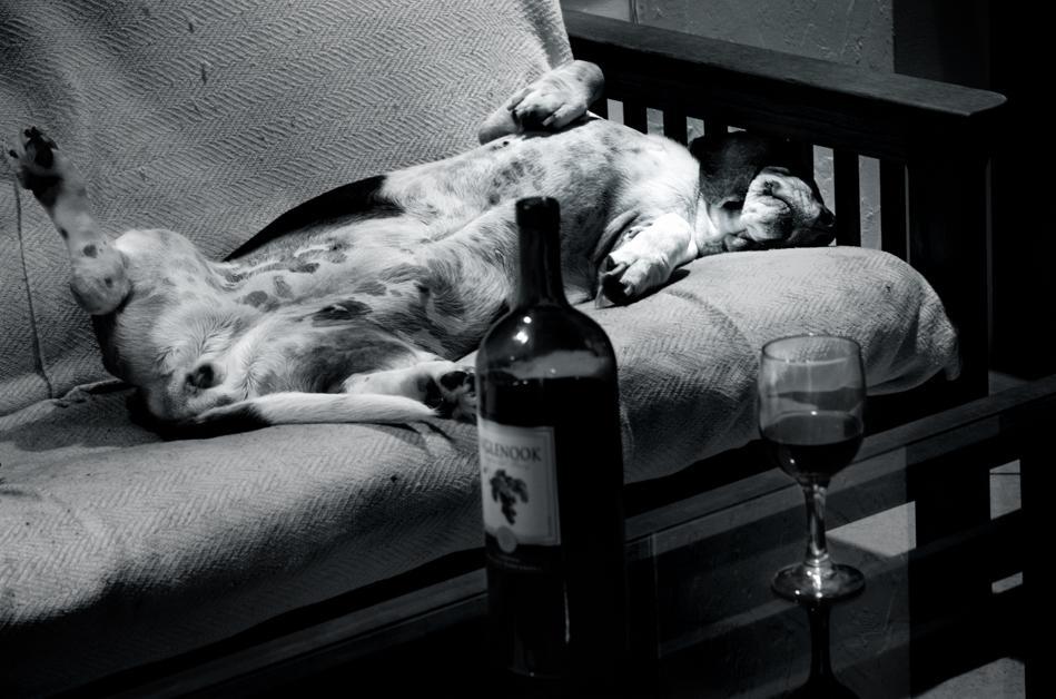 Funny Dog Sleep