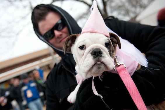 Pink Dog Costume