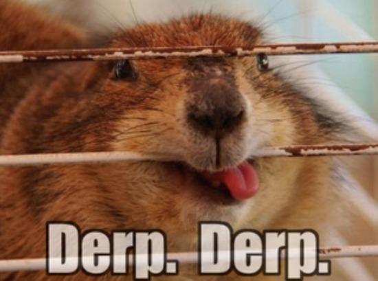 Animal Derp