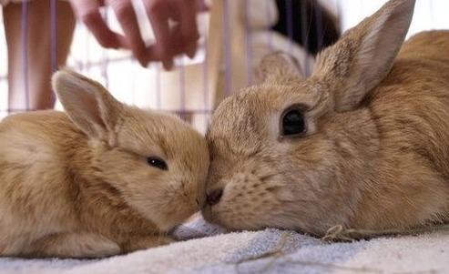 Bunny Mom