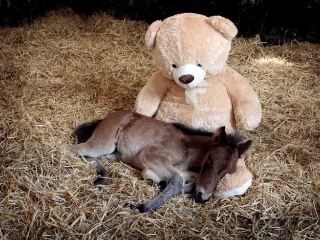 Orphaned Pony