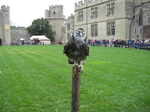 Smug Owl