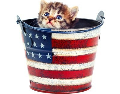 Cute Animals July 4