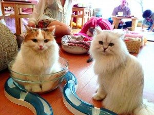 cats-in-cafe-with-bowl