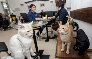 cats-in-vienna-cafe