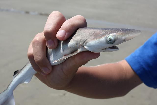 Cuteness Overload: Cute Sharks - Hop to Pop