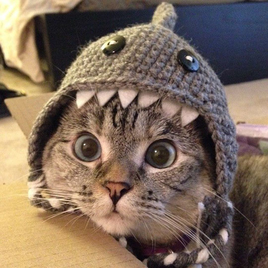 ITT: Cuteness!!!!  Cute-shark-8